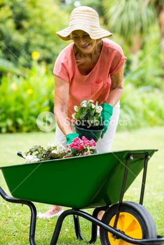 Senior woman holding flower pots in yard