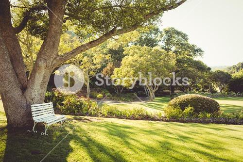 View of a park on a sunny day