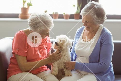 Senior women stroking a dog