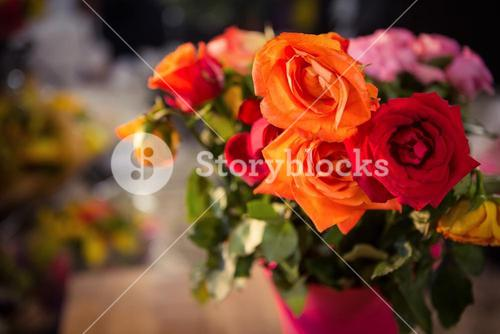Close-up of orange and red roses