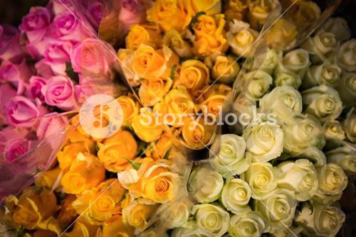 Close-up of various roses