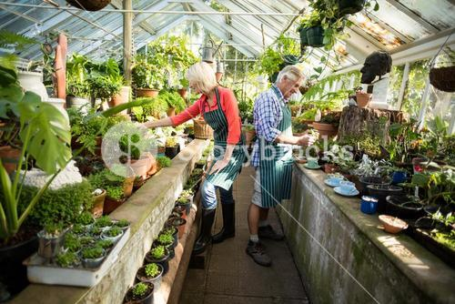 Couple working at greenhouse