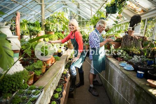 Happy couple  working at greenhouse