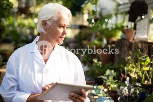Female scientist observing plants at greenhouse