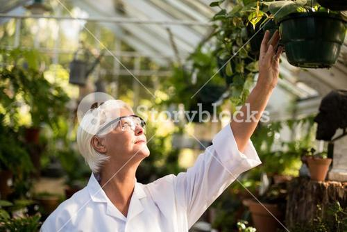Female scientist examining potted plants