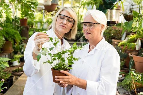 Colleagues examining potted plant at greenhouse