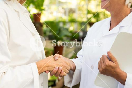 Midsection of female colleagues shaking hands