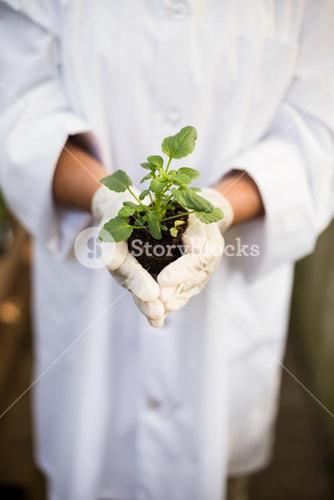 Scientist holding plant at greenhouse