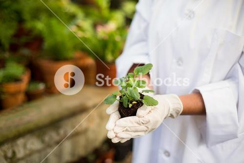 Scientist holding plants at greenhouse