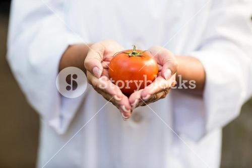 Scientist holding fresh tomato at greenhouse