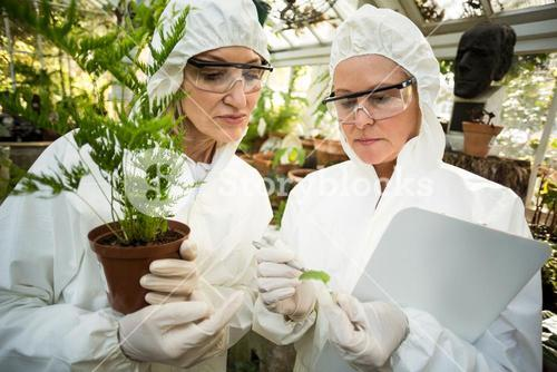 Female scientists in clean suit examining plants