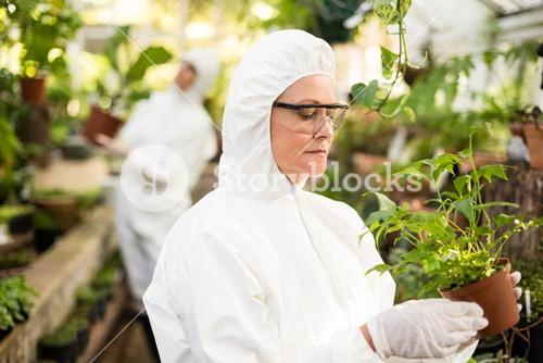 Female scientist in clean suit examining potted plant