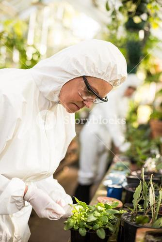 Side view of female scientist examining potted plant