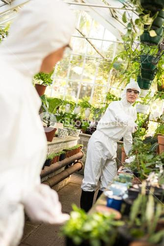 Female coworkers working at greenhouse