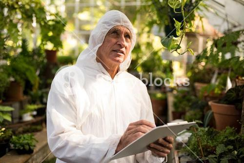 Male scientist inspecting in greenhouse