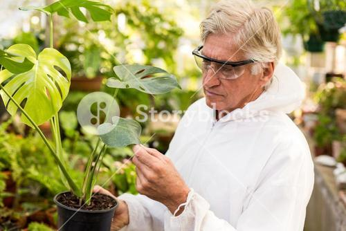 Male scientist in clean suit examining plant leaves