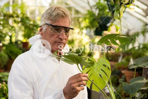 Male scientist in clean suit inspecting plant leaves