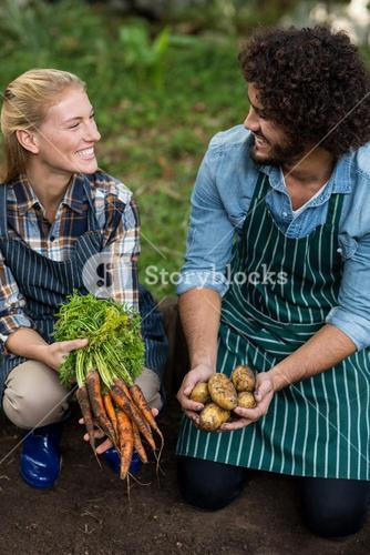 Coworkers holding harvested vegetables on field