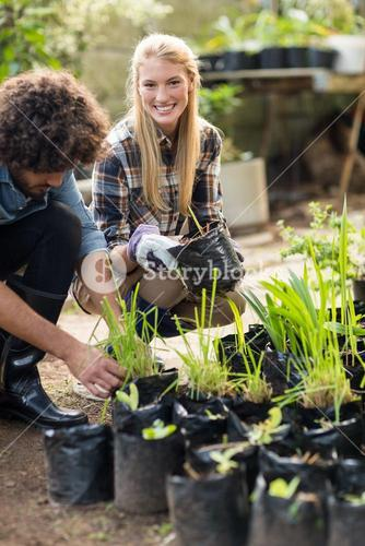 Gardeners inspecting potted plants