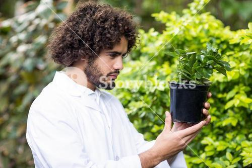 Male scientist examining potted plant