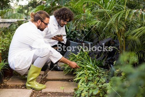 Male scientists inspecting plants