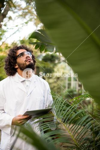 Scientist inspecting plants at greenhouse