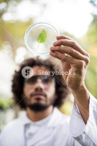 Male scientist inspecting leaf on petri dish