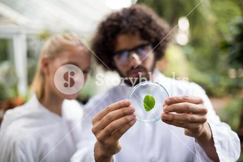 Coworkers inspecting leaf on petri dish