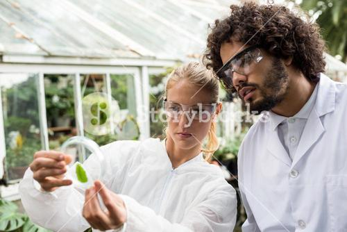 Colleagues inspecting leaf on petri dish