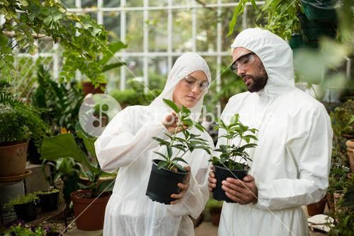 Scientists in clean suit examining potted plants