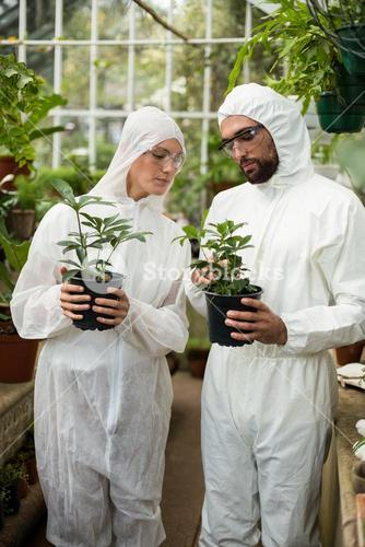 Scientists examining potted plants