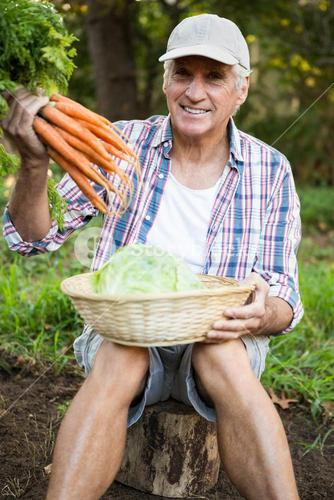 Portrait of man with carrots and cabbage at garden