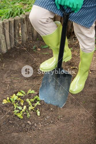 Low section of gardener with shovel at garden