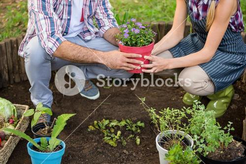 Low section of gardeners holding potted plant at garden
