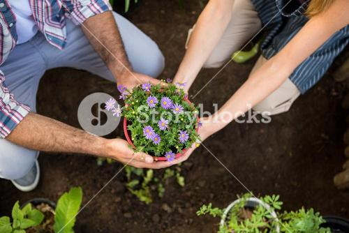 High angle view of gardeners holding potted plants at garden
