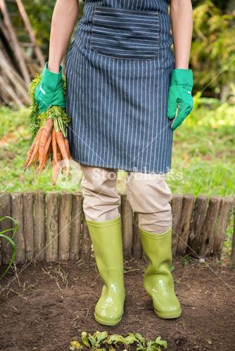Low section of gardener with carrots at garden