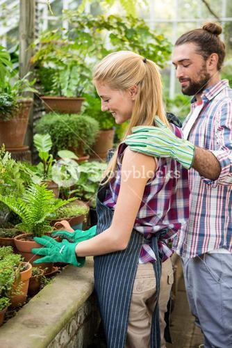 Colleagues placing potted plant in greenhouse