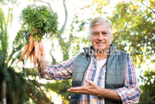 Portrait of mature gardener with carrots at farm