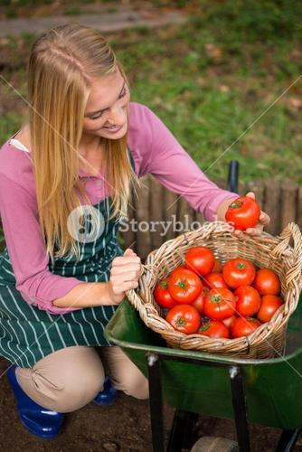 High angle view of happy gardener looking at fresh tomatoes in basket at garden