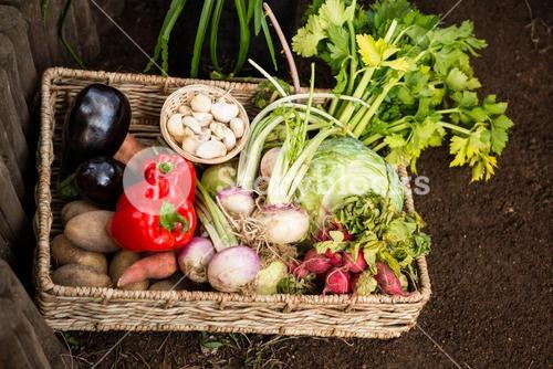 High angle view of vegetables in wicker crate at garden