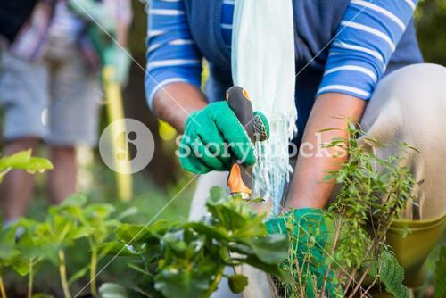 Midsection of gardener planting potted plants at garden