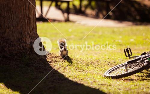 Squirrel by bicycle fallen on field