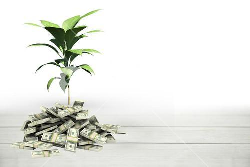 plant growing from money pile