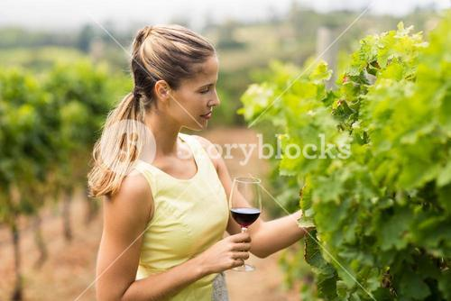 Female vintner holding wine glass and inspecting grape crop
