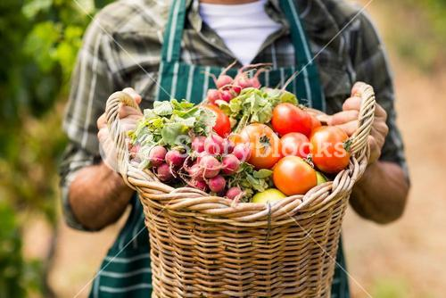 Mid section of farmer holding a basket of vegetables