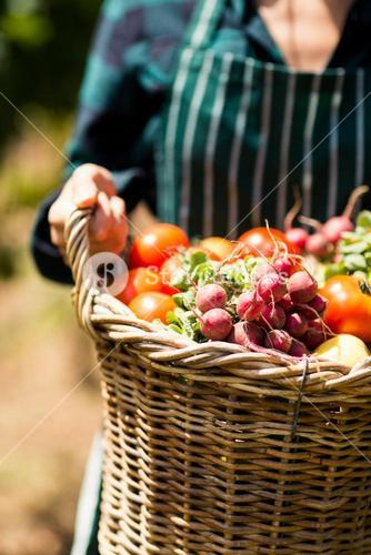 Mid section of female farmer holding a basket of vegetables