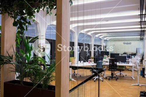 Empty office with pot plant