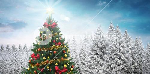 Christmas tree in snowy forest