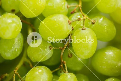 Full frame of grapes