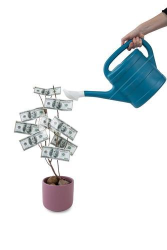Womans hand pouring water on money plant with watering can